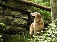 Особенности воспитания собаки в загородном доме