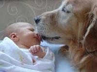 В Аргентине собака спасла новорожденного