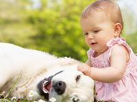 Человек и собака связаны крепче, чем многие полагают