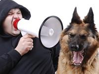 Собаки действительно способны понимать значение слов