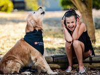Золотистый ретривер Чарли- самая громкая собака в мире