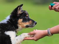 Как по языку тела собаки определить, что она хорошо усвоила навык?