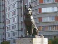 Пес Константин- символ верности из города Тольятти