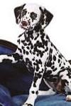 дрессировка собак щенок статьи