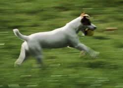 Анатомия и биомеханика собаки